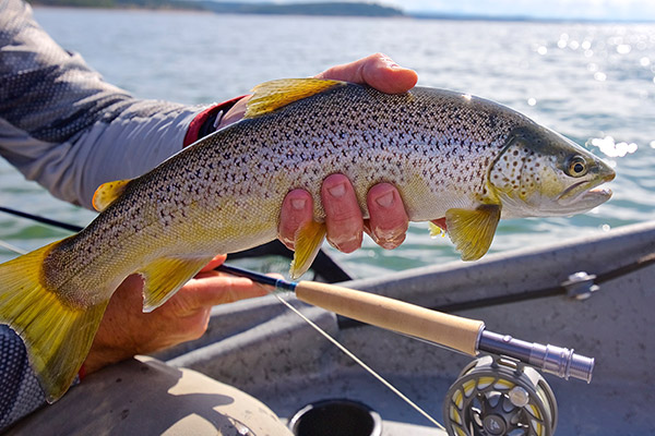 Fishing Jackson Hole trout in anglers hand
