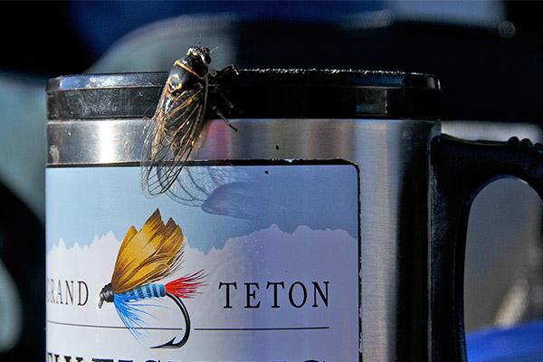 Fishing Jackson Hole fly fishing fly on coffee mug