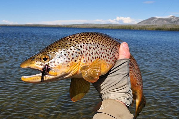 Jackson Hole Full Day Fly Fishing Trips