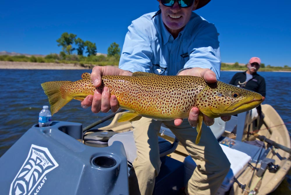 Our guide showing a nice trout on the green river while fly fishing in wyoming